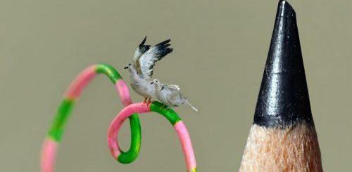 kroshechnye-pticy