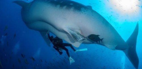 """ТОП-10: Увлекательные факты и истории об акулах"""">"""
