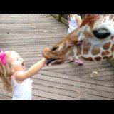 5 ЗАБАВНЫХ случаев в зоопарке