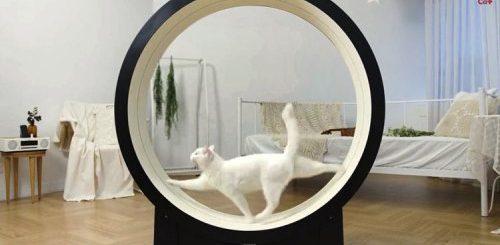 """Умная беговая дорожка для кошек от корейского стартапа Pet Ding (2 фото + видео)"""">"""