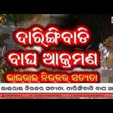 viral news odisha | Daringibadi Tiger Attack true or Fake? | viral video news odisha