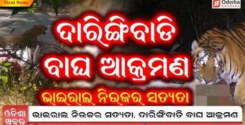 viral news odisha   Daringibadi Tiger Attack true or Fake?   viral video news odisha