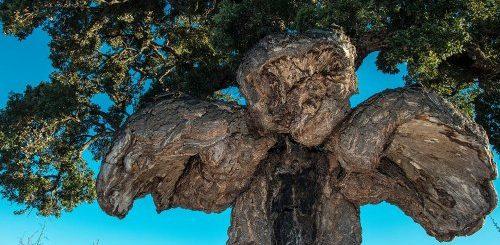 """ТОП-15: Европейские деревья с самой интересной историей"""">"""