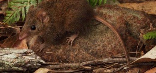 10 животных с особо сильной тягой к саморазрушению