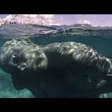 Научный мир потрясён. В океане найдена подводная цивилизация. - ТАЙНЫ МИРА