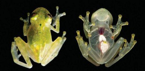 """ТОП-10: Удивительные факты о лягушках, доказывающие, что они — фантастические создания"""">"""