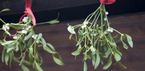 """ТОП-10: Прекрасные, но ядовитые цветы"""">"""