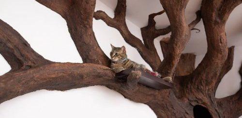 "Дерево для настоящего учёного кота (7 фото)"">"