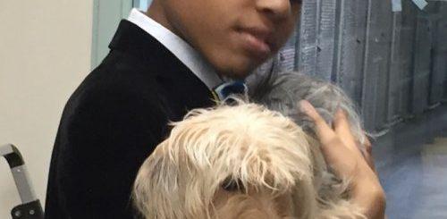 """12-летний мальчик шьёт галстуки-бабочки для животных из приютов, чтобы помочь им быстрее обрести любящих хозяев и новые дома (18 фото)"""">"""
