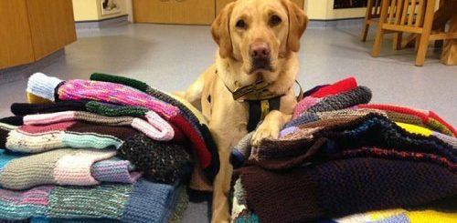 """89-летняя британка вяжет для приютских собак одеяла и одежду, чтобы им было теплее и уютнее, пока они не найдут себе новый дом (8 фото)"""">"""