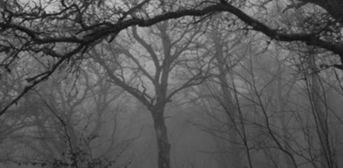 """ТОП-10: Леса в Великобритании, куда вы ни за что не пойдете ночью"""">"""