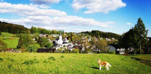 """Аиюки, очаровательная собака породы акита-ину, которая обожает пешие прогулки вместе со своим хозяином (10 фото)"""">"""