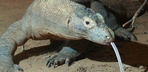 """ТОП-10: Животные, которые не выглядят ядовитыми, но на самом деле таковыми являются"""">"""