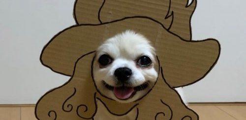 """Очаровательный чихуахуа Маметаро из Японии, который любит носить картонные маски (16 фото)"""">"""