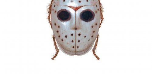 """Новые виды насекомых, вдохновлённые фильмами ужасов и детскими мультфильмами, в иллюстрациях Ричарда Уилкинсона (11 фото)"""">"""