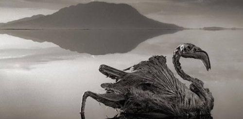 """ТОП-10: Интригующие открытия, сделанные в озерах"""">"""