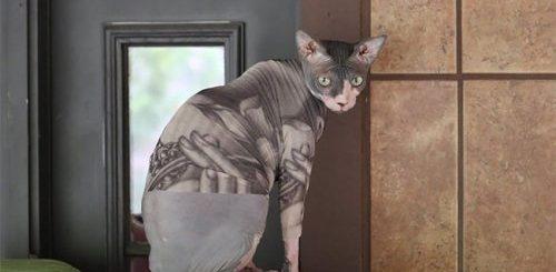 """Стильные """"татуированные"""" боди для сфинксов, которые так же круты, как и кошки этой породы (21 фото)"""">"""