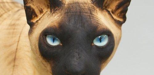 """Художник вырезает невероятно реалистичные скульптуры домашних животных из массивных стволов дерева (11 фото)"""">"""