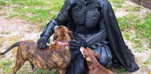 """Этот Бэтмен — герой, спасающий приютских животных от эвтаназии (10 фото)"""">"""