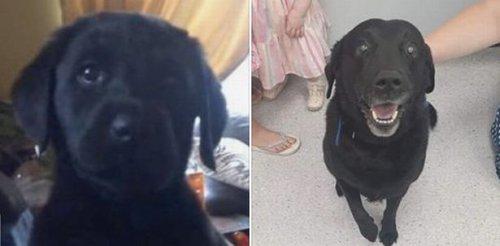 """Мужчина создал счастливую семью благодаря пропавшей собаке... которая нашлась спустя 9 лет (4 фото)"""">"""