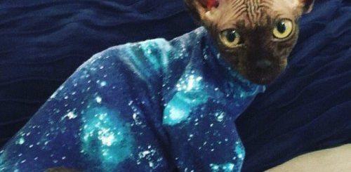 """Дизайнер из Калифорнии создаёт забавные костюмы для кошек (9 фото)"""">"""