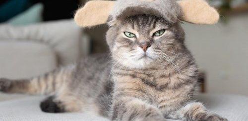 """В Японии живут три кошки, у которых есть целая коллекция шляпок и шапок, сделанных из их собственной вычесанной шерсти (17 фото)"""">"""