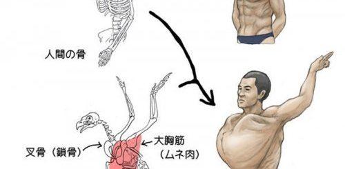 """Проанализировав анатомию животных, художник показал, каким был бы человек, если бы имел скелет различных животных (9 фото)"""">"""