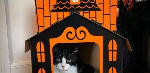 """Кошачий замок с привидениями на Хэллоуин (12 фото)"""">"""