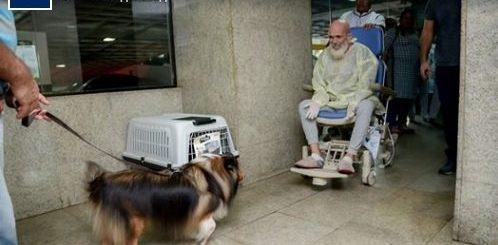 """Врач удивился улучшению состояния своего пациента после того, как последнего посетила его собака (4 фото)"""">"""