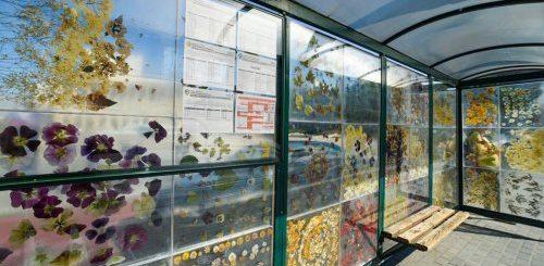 """Трамвайную остановку в польском городе превратили в галерею-гербарий (11 фото)"""">"""