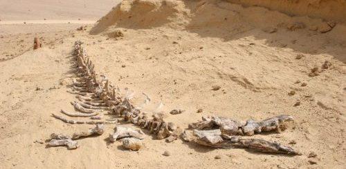 """Долина китов в Египте - важный палеонтологический объект (9 фото)"""">"""