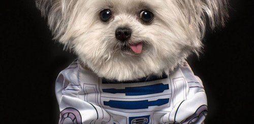 """Этот крошечный терапевтический пёсик Норберт имеет огромную армию поклонников в Instagram (11 фото)"""">"""