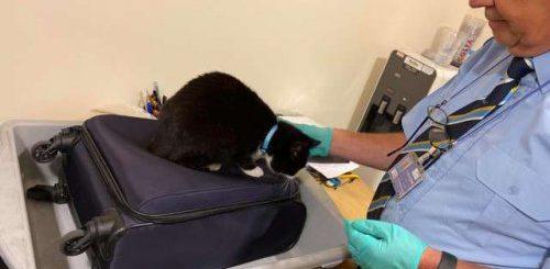 """Кошка попыталась помешать своим родителям отправиться в поездку без нее (4 фото)"""">"""