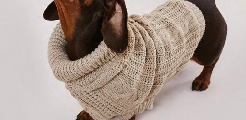 """Британский бренд одежды начал продавать парную стильную одежду для собак и их владельцев (6 фото)"""">"""