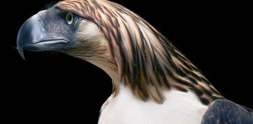 """Красочные портреты необычных и исчезающих птиц в фотопроекте Тима Флэка (8 фото)"""">"""