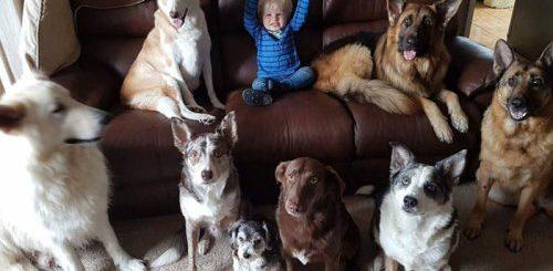 """Вы когда-нибудь пытались сделать фотографию с 3-мя домашними животными? А с 17-тью? (5 фото)"""">"""