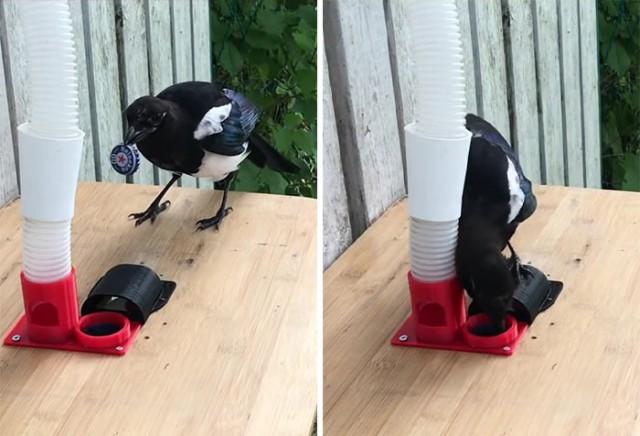 Инженер построил кормушку для птиц, но не простую, а выдающую еду в обмен на крышки (6 фото + видео)
