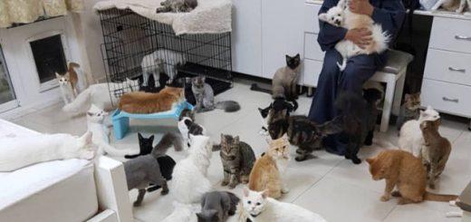 Любительница животных живёт в доме с 480 кошками и 12 собаками (2 фото + 2 видео)