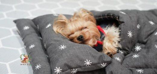 Щенячий детский сад делится очаровательными снимками своих щенков во время сна, и это самое милое, что вы сегодня увидите (18 фото + видео)