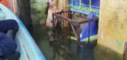 Собака попала в ряды морских пехотинцев, которые её спасли во время наводнения в Мексике (16 фото)