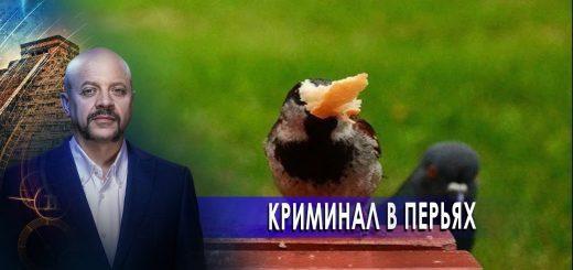 kriminal-v-perjah-zagadki-chelovechestva-s-olegom-shishkinym-18.11.20