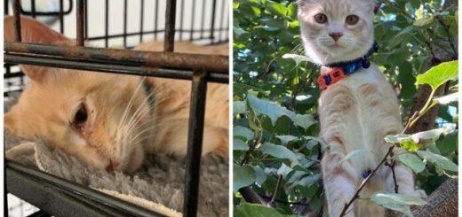 Трогательные истории и фотографии спасённых кошек, сделанные до и после усыновления (12 фото)