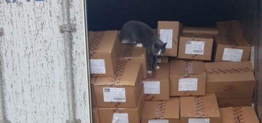 Нелегальная пассажирка: кошка провела 3 недели в запертом контейнере с конфетами, попав из Украины в Израиль (3 фото)