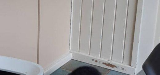 Кот привёл домой бездомного котёнка, чтобы семья его усыновила. Теперь они все неразлучны (15 фото)