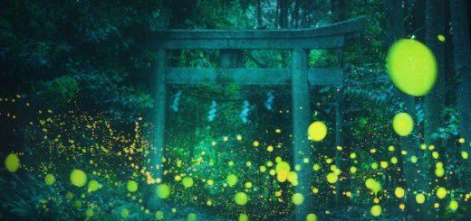 Российский пейзажный фотограф сделал волшебные фотографии светлячков, освещающих японский лес (5 фото)