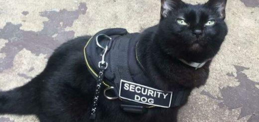 16 очаровательных кошек, которые каждый день ходят на работу