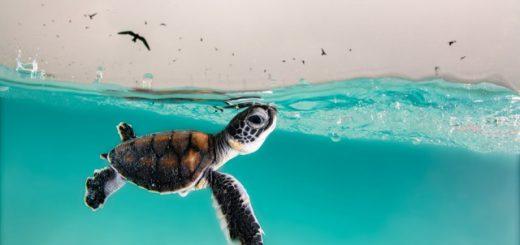 Самые впечатляющие работы финалистов конкурса на лучшую морскую фотографию Ocean Photography Awards 2021 (12 фото)