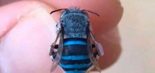 Самые необычные и красивые жуки и другие насекомые, замеченные Интернет-пользователями (17 фото)