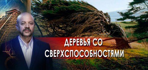 derevja-so-sverhsposobnostjami-zagadki-chelovechestva-s-olegom-shishkinym-08.10.21