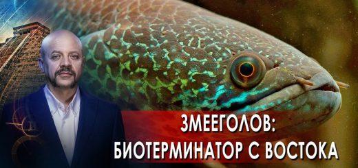 zmeegolov-bioterminator-s-vostoka-zagadki-chelovechestva-s-olegom-shishkinym-06.10.21